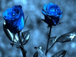 To dye and live is to rise the rose within.